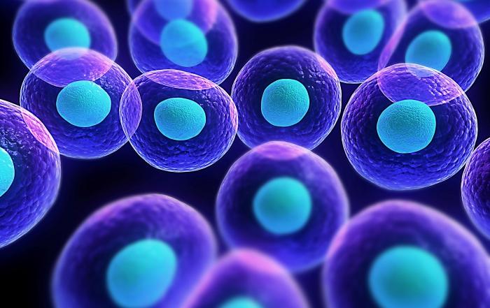 cells2
